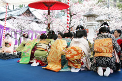 O B I : The Plum Blossom Festival (mboogiedown) Tags: travel people woman girl beauty festival japan asian japanese interestingness kyoto shrine asia tea blossom traditional blossoms ceremony culture plum explore maiko geiko geisha kitano kimono obi february kansai seiza nodate tenmangu baikasai odaiko kamishichiken wagasa i500 darari diamondclassphotographer goldstaraward