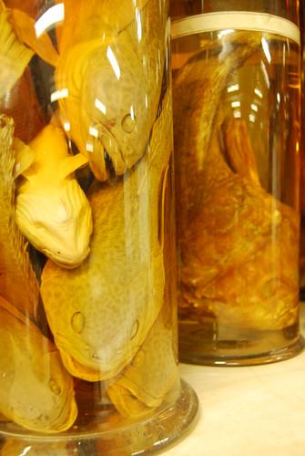 Miss Prism's DNA scarf · Specimen jars