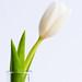 Whiter shade of pale by .: karenA :.