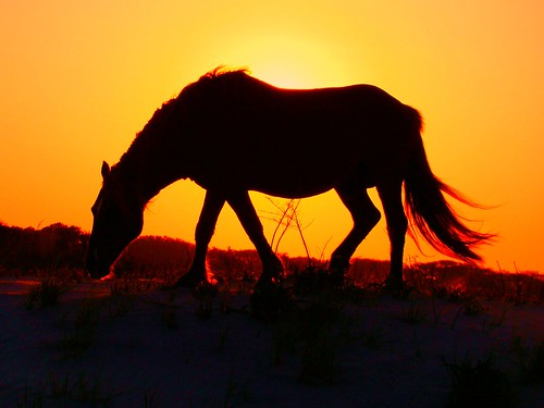 assateague pony sunset cruise