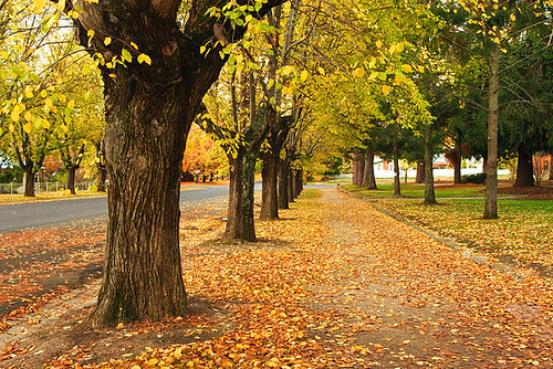 Beechworth, Victoria, Australia, Loch Street, autumn IMG_9945_Beechworth_Loch_Street