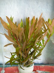 Thủy Sinh Tuấn Anh-Chuyên cây & Rêu Thủy Sinh, Cá Cảnh Biền & Hồ Cá Cảnh Biển - 13