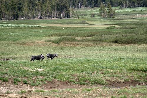 Run Dogs Run