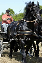 lz190504(80) (Lothar Lenz) Tags: deutschland friese pilcher 56812dohr