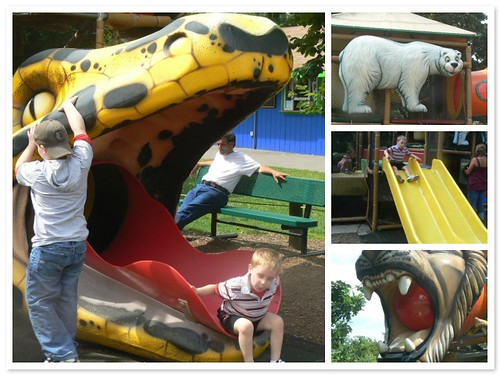 Fun on the zoo playground