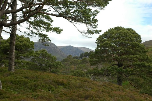 Beinn Mheadhoin through the pines