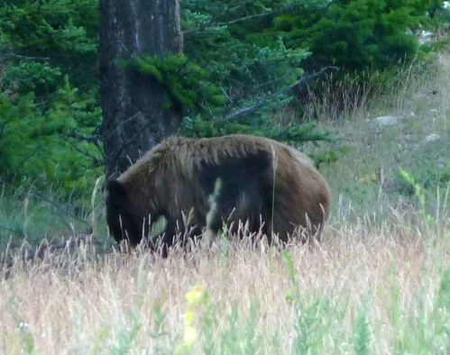 Our Grizzly Neighbour