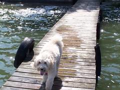 Klinger Lake (51) (dalumetal) Tags: lake water dock michigan sandy klinger