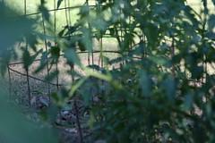 IMG_3455 (Blackavar Lion) Tags: rabbit bunny conejo coelho  lapin watershipdown kaninchen    canonrebelxti  2be2176f59cfac7c3f99b44a73b29c9b