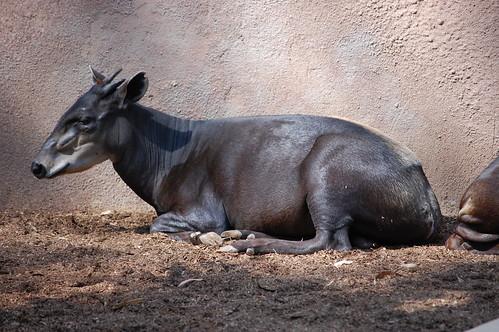 zoo 031