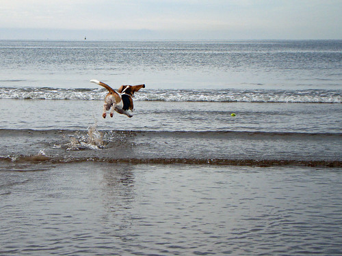 FlyingBeagle