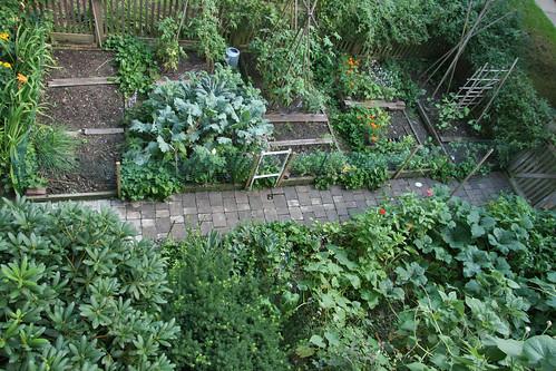 my home garden