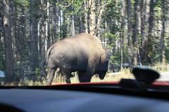 Roadtrip USA 08 - Vilde dyr