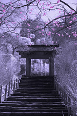 Temple Entrance Under Pink Plum Blossoms in Kamakura (aeschylus18917) Tags: pink flowers red sky flower macro tree nature japan stairs season landscape ir temple spring nikon scenery seasons d70 nikond70 kamakura plum surreal infrared  hydrangea nikkor  kanagawa  infra 1870mm tera f3545g hortensia 1870 rosales  plumblossoms meigetsuin   hydrangeaceae magnoliopsida kanagawaken   1870f3545g  cornales kanagawaprefecture asterids kamakurashi meigetsuintemple  kamakura nikkor1870f3545g hydrangeatemple danielruyle aeschylus18917 danruyle druyle    nikkor1870f3545gdx