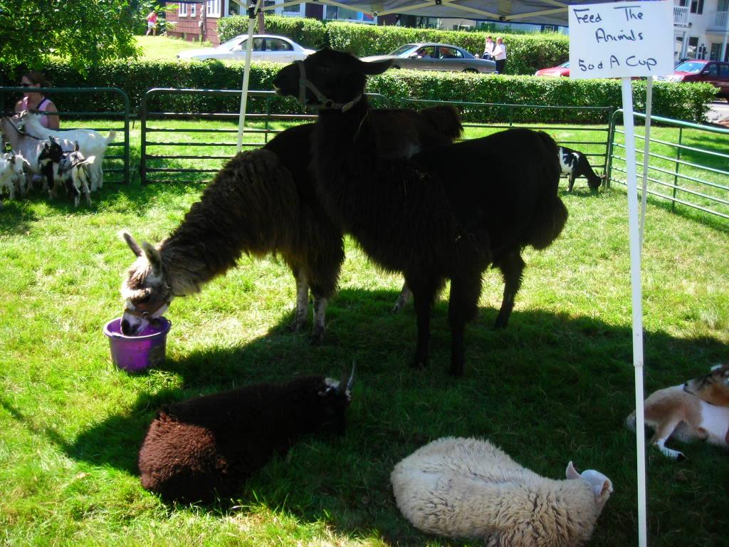 lovely livestock