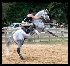 Tenor Verse (Rock and Racehorses) Tags: black grey gray jumper thoroughbred rearing rearinghorse tenorverse