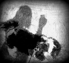 Hank and Shadowy Me, Holga-ized