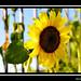 Sunny Sun Photo 37