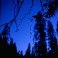 blue forest (. ) Tags: tree 120 6x6 film fuji slide carinthia hasselblad velvia 50 500cm filmisnotdead kolbnitz canoscan8800f riekenalm