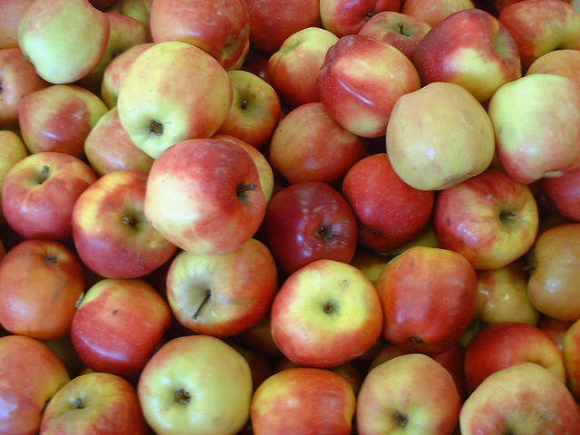 "Lots of ""Pacific Rose"" apples"
