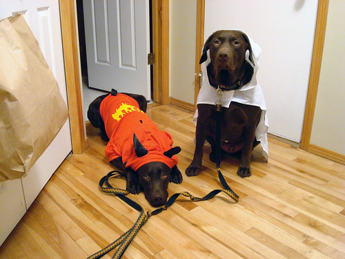 Cooper and Jackson Celebrate Halloween