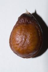 cherimoya seed