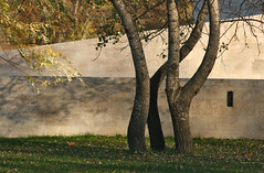 Still Dancing (sonofsteppe) Tags: life park city autumn trees light shadow urban inspiration plant detail art fall beauty leaves stone wall composition creativity outdoors golden town still stem scenery soft hungary branch quiet view place natural pair budapest restful peaceful atmosphere nobody scene structure explore part human silence fallen simplicity area static environment coexistence form resting pentacon piece deciduous shape visual simple exploration manualfocus ambience tranquil autumnal built 135mm fragment bending individuality bole temperate vrosliget emphasize sonofsteppe pusztafia urbanlifeoftrees