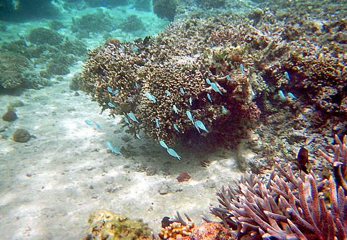 Fiji Snorkeling by Ik T