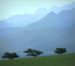 Three Trees on a Hill (Sandra Leidholdt) Tags: africa trees mountains nature landscape southafrica african scenic explore paysage westerncape  afriquedusud zuidafrika explored sandraleidholdt leidholdt sandyleidholdt