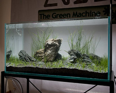 TGM ADA Demo - Aquascape complete (Stu Worrall Photography) Tags: green wales ada tank north machine demonstration meet wfc planted wrexham aquascaping tgm stuworrall ukaps ukapsorg francesconardelli