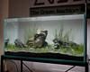 TGM ADA Demo - Aquascape complete (Stu Worrall Photography) Tags: green wales ada tank north machine demonstration meet wfc planted wrexham aquascaping tgm stuworrall ukaps ukapsorg francesconardelli