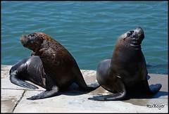 Con vos no hablo. (roxboyer) Tags: mar playa estudio ojos tres animales mardelplata lobosmarinos digitalcameraclub totalphoto roxboyer