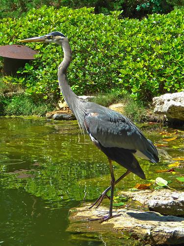 114/365: Japanese Garden Crane