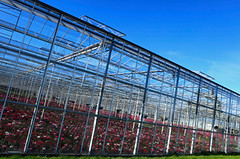 Commercial Greenhouse Jobs