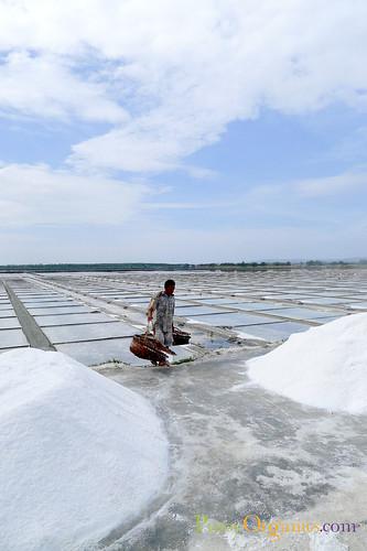 Mina de Oro-Harvesting Salt