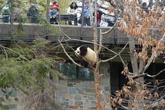 DSC_8408 (thetejon) Tags: zoo nationalzoo dczoo