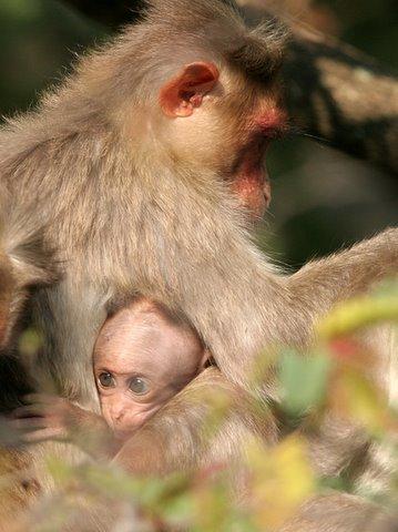 hiding near mommy