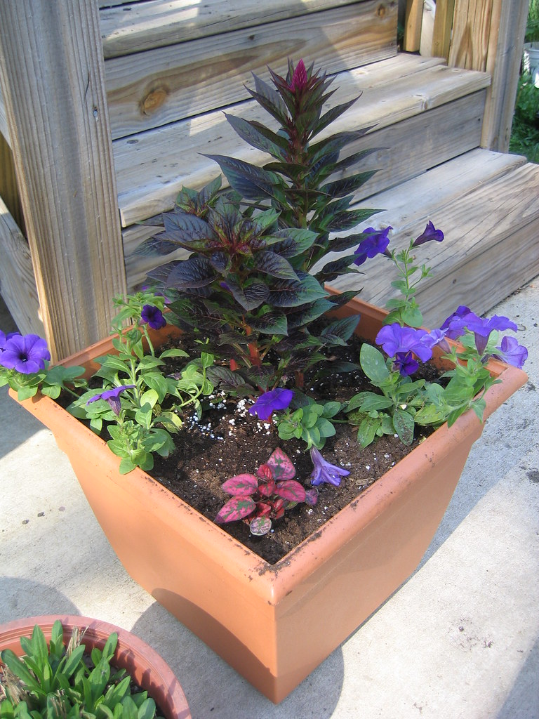 annual planters for the back stoop