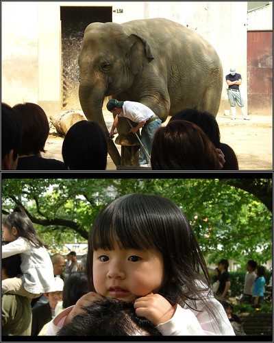 はじめて見た象 Hana-chan(2 years old) and the elephant--王子動物園-20080429-CIMG0339