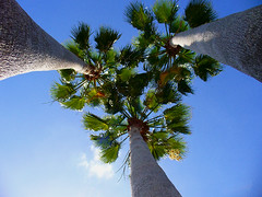 A tourist's view of Florida (Barefoot In Florida) Tags: sky florida palmtrees
