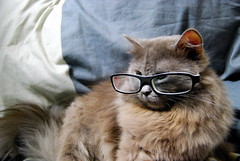 Smart Cat (Shakir's Photography) Tags: white black cute look smart cat hair glasses nice kitten long pretty gray neat lovely   shanko