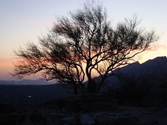 tree at sunset (azhiker_grrl) Tags: sunset arizona tree nature desert tucson hike sabinocanyon blackettsridge