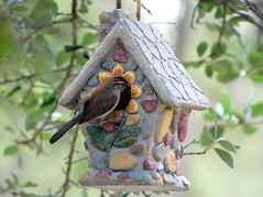 Making sure everything's ready (Tea Wells) Tags: bird birdhouse wren