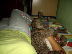 Las 7 diferencias (Catwomancristi) Tags: face siesta catwoman chispa perrodeagua dormidas dormilonas catwomancristi