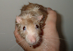Eli's bath