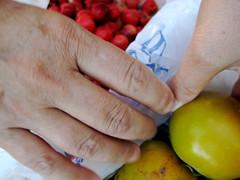 acerola e caqui chocolate (parttimefarm) Tags: brasil fruit hands farm persimmon acerola echapora