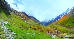 Valley of Flowers National Park ('HD' nature) Tags: desktop blue wallpaper sky cloud brown india white mountain snow flower color colour green heritage ice nature colors grass yellow fog stone clouds forest landscape evening nationalpark scenery colorful colours mt image path stones widescreen sony hill wide unesco hills valley highdefinition hd hay hq himalaya soe himalayas worldheritage valleyofflowers supershot valleyofflower dsch3 sonydsch3 wwf:ecoregion=pa1021 westernhimalayanalpineshrubandmeadows