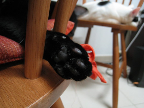 These paws conceal fearsome claws
