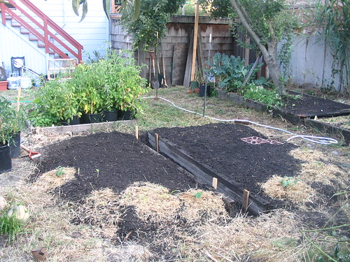 garden beds, planted