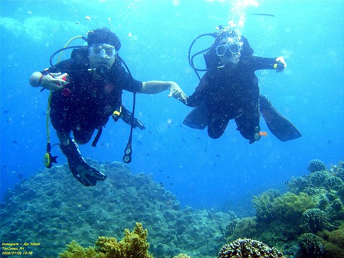 Diving in Bohol